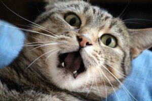 Kot z pęcherzem